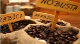 Le Robusta reprend des forces