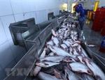 Thêm cơ hội cho ngành chế biến xuất khẩu cá tra của Việt Nam