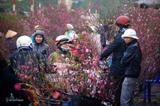 CNN : Le marché aux fleurs de Quang Ba une destination à ne pas manquer à loccasion du Têt