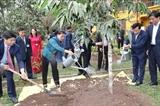 Посадка деревьев в Мемориальном комплексе Президента Хо Ши Мина
