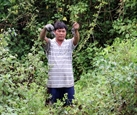 Farmers profit from breeding crabs amid mangroves