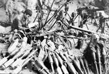 La lucha por proteger la frontera norteña: lección histórica para Vietnam
