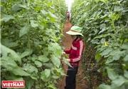 Du lịch trang trại phát triển ở xứ sở ngàn hoa