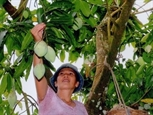 Fruit farmers encouraged to apply GAP standards