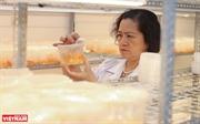 Доктор наук доцент Ле Май Хыонг – ведущая женщина-ученый в области естественной химии