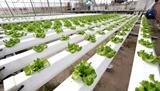 Hachi hydroponic farm