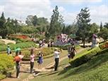 Festival ផ្កា Dalat ឆ្នាំ ២០១៩ នឹងប្រព្រឹត្តទៅនៅខែធ្នូឆ្នាំ ២០១៩