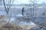 Kịp thời dập tắt vụ cháy rừng trên núi Sơn Trà Đà Nẵng