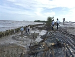Ca Mau takes prompt actions against dyke erosion