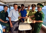 Quang Ninh reintroduces green sea turtle into the wild