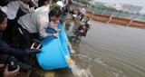 Thả cá Koi Nhật Bản xuống sông Tô Lịch và Hồ Tây để đo độ trong sạch của nước
