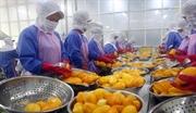 Вьетнам принял стандарты определения происхождения и контроля качества товаров