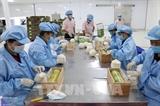 EVFTA открывает множество возможностей для экспортеров Вьетнама