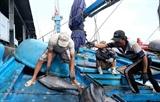АСЕАН Today: Вьетнам активно прилагает усилия в борьбе с незаконным рыболовством