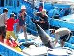 В сентябре резко вырос экспорт вьетнамского тунца в Италию