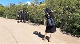 Tuần lễ hoa dã quỳ - núi lửa Chư Đăng Ya Gia Lai