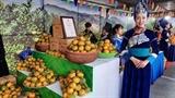 Muong Khuong mandarin week opens in Hanoi