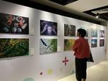 Sống động sắc màu văn hóa con người Việt Nam qua những bức ảnh