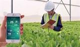 Вьетнам продвигает высокотехнологичное сельское хозяйство