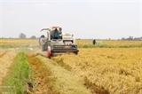 Лонган расширяет производство высококачественного и высокотехнологичного риса