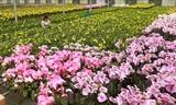 Đan Hoài vào mùa hoa lan hồ điệp