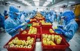 Экспорт вьетнамской сельхозпродукции в Японию вырос