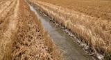 Le delta du Mékong  face à la sécheresse et lintrusion saline