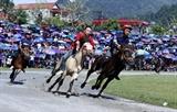 Hấp dẫn vòng chung kết Giải đua ngựa truyền thống Bắc Hà 2020
