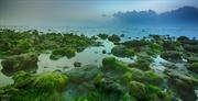 Seaweed field in Ninh Thuan