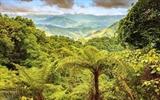 Донгчау-Кхеныокчонг становится природным заповедником в Куангбине