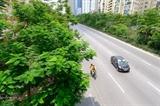 Власти планируют сделать Ханой зеленее