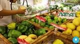 농장의 청정을 고객의 식탁까지 전달하는 남안마켓