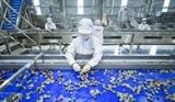 Завод по переработке свежих фруктов и овощей вступил в строй в Шонла