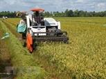 Кьенжанг: экспортная выручка за 9 месяцев выросла более чем на 14%