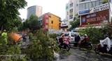 Телеграмма со словами сочувствия в связи с тайфуном Ноул