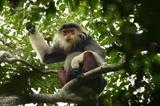 Дананг утвердил генеральный план сохранения биоразнообразия