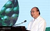 Премьер-министр: Для отечественного сектора макадамии нужна стратегия