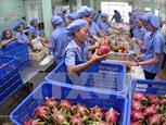 Вьетнам и Нидерланды стремятся увеличить торговлю фруктами и овощами