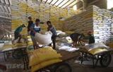 Вьетнам экспортирует 1.600 тонн риса по высокой цене в Сингапур и Малайзию