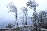 베트남 산지역 이상 저온에 눈내리고 가축 폐사