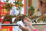 Trâu cõng quất bonsai Tứ Liên thu hút khách hàng