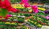 Куангбинь потратила 122 миллиона евро на организацию Международного фестиваля цветов в 2023 году