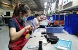 Фирмы в провинции Донгнай быстро возобновляют работу