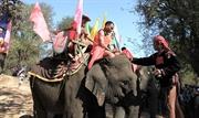 Lễ cúng sức khỏe cho voi