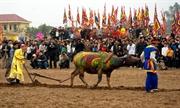越南文化生活中的水牛