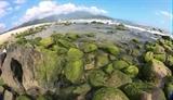 Nam O Reef the green pearl of Da Nang