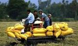 베트남 식량안보지수 세계 63위