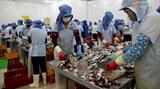 Thủy sản Tắc Cậu khẳng định thế mạnh xuất khẩu surimi