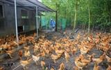 ВОЗ: Птичий грипп A (H5N8) может передаваться от птиц человеку