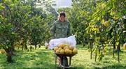 河内开展确保食品安全的5项核心任务
